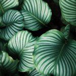vendita e noleggio piante fiorista milano