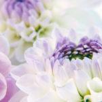 allestimenti floreali addobbi floreali matrimonio