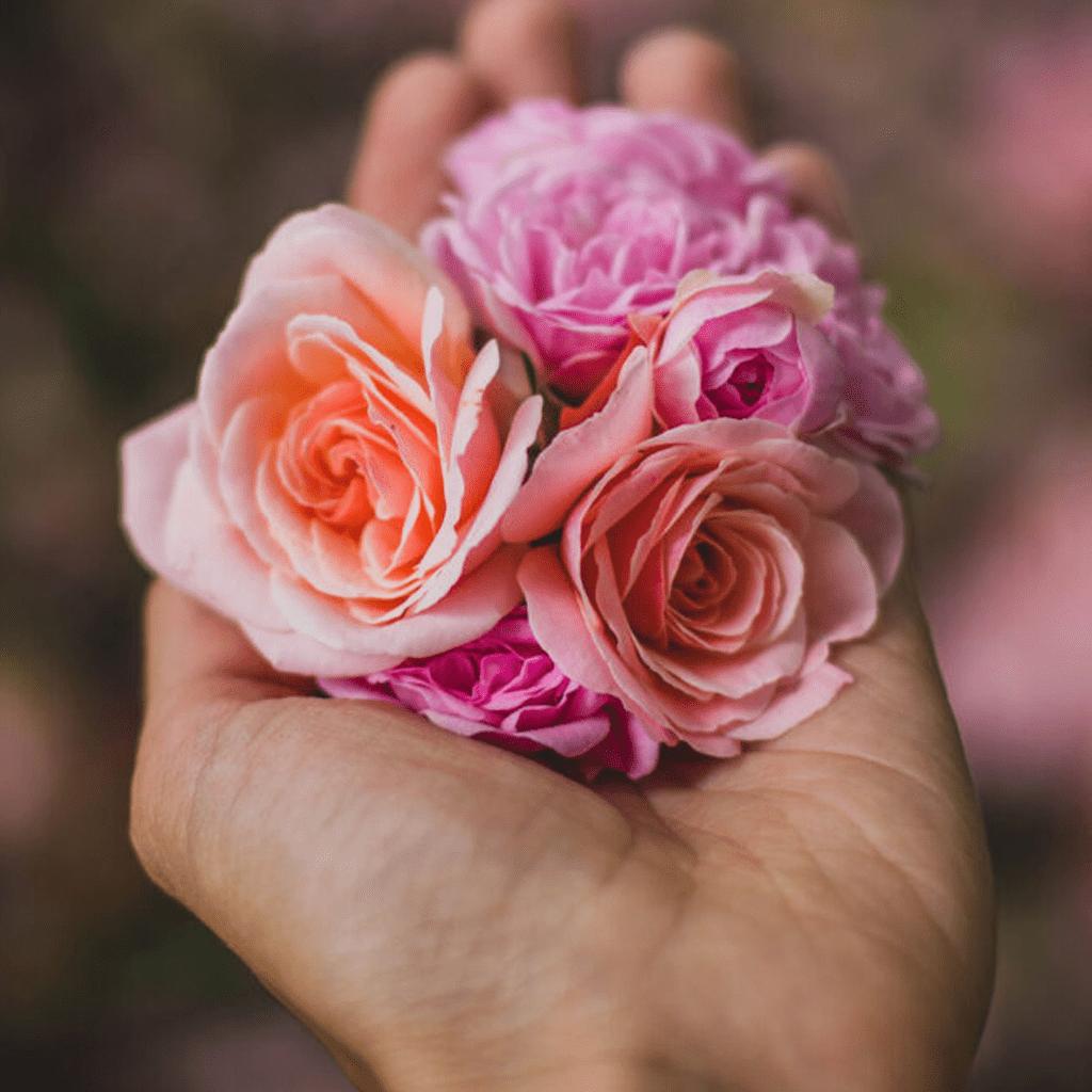 quali fiori per farsi perdonare