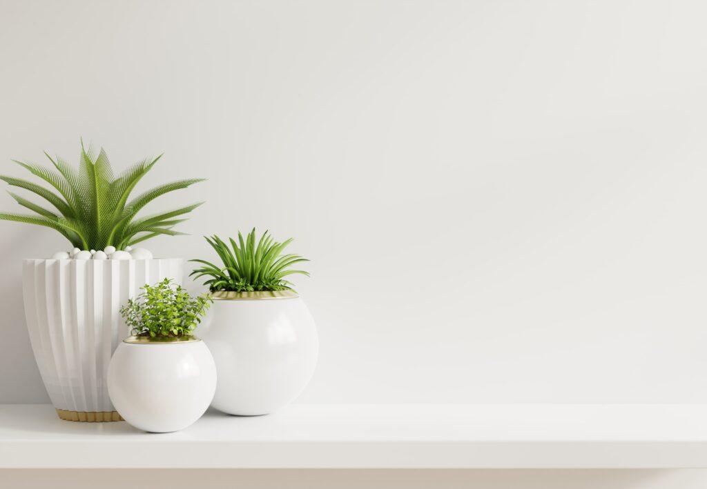noleggiare piante per eventi