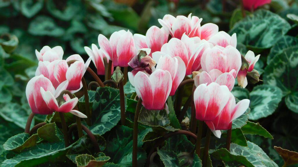 composizioni floreali invenali