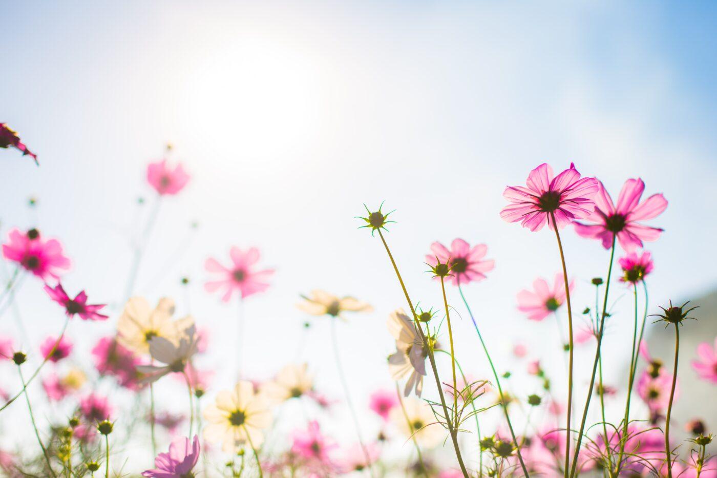 i fiori più belli della primavera