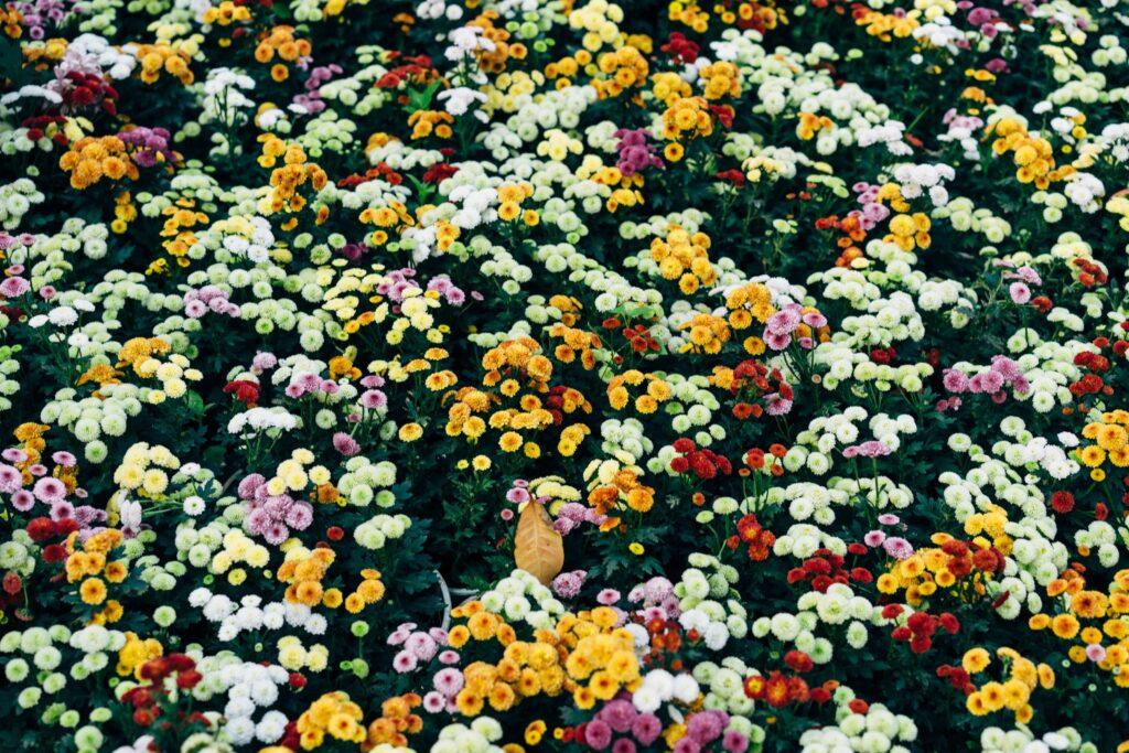 aiuole - noleggio piante